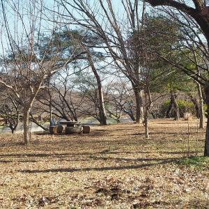 樹木が寒そうな武蔵野公園 其の4
