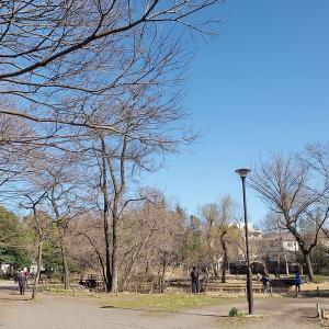 明るさが春らしくなって来た石神井公園です その1
