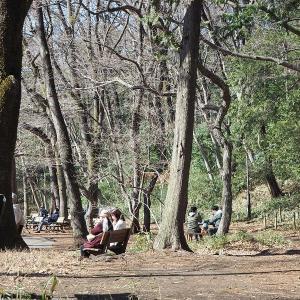 明るさが春らしくなって来た石神井公園です その2