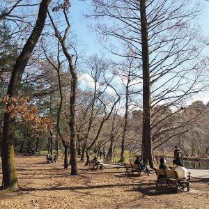 明るさが春らしくなって来た石神井公園です その3