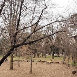 井の頭公園の春はもう少しでしょう その1