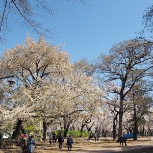 桜と緑色が映えるようになった井の頭公園です その3