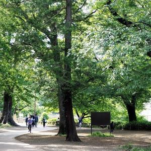 緑陰散歩は井の頭公園です その4