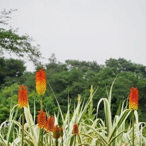 春から三ヶ月ぶりの神代植物公園です その4