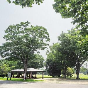 静かな晴天の昭和記念公園を訪れました その4