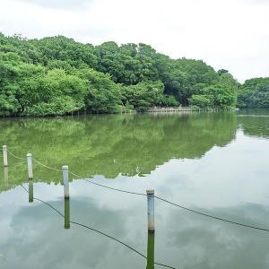 人影が少ない善福寺公園です その1