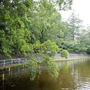 雨模様になる武蔵関公園です その1