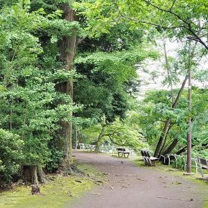 雨模様になる武蔵関公園です その2