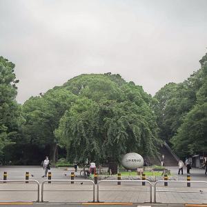 7月だというのに涼しく静かな上野公園です その1