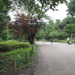 7月だというのに涼しく静かな上野公園です その2