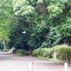 7月だというのに涼しく静かな上野公園です その4