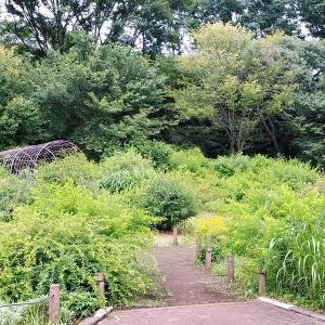 広々とした緑の神代植物公園は一気に夏模様に その4