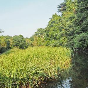 緑が濃くなった石神井公園 ≪三宝寺池≫ その2