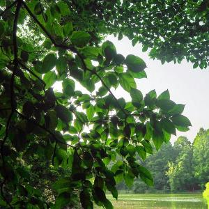 緑が濃くなった石神井公園 ≪三宝寺池≫ その3