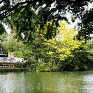石神井公園の樹々が 其の1