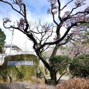 大倉山公園梅林/横浜・大倉山駅より徒歩7分★住宅街にある梅の名所として有名な公園、現在見ごろを迎えています!!!