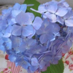時々思い出してしまう~ ハート形の紫陽花見つけた?