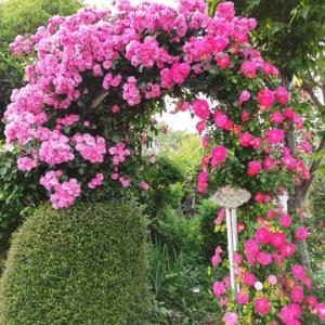 奥市川の花園の家
