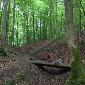 TAROと森を歩く