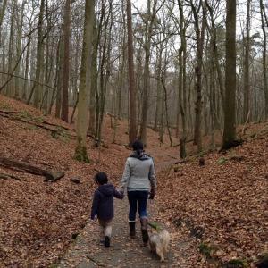 TAROと森を歩く 2
