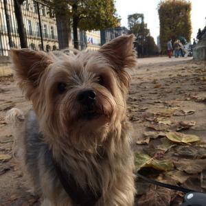 TAROと歩く@パリ