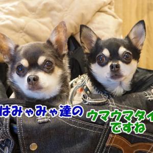 『愛犬ヴィレッジ』さんへ♪<後編>@東京旅行2018⑤