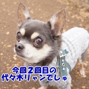 不思議な生物に見える?(*´艸`*)@東京旅行2018⑧
