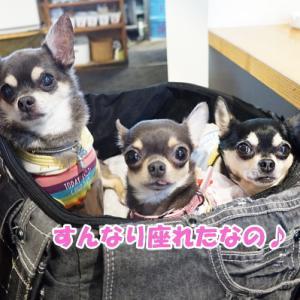 名古屋のドッグカフェに初上陸(ё▽ё)@わんだらけ