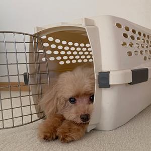 犬の毛の再利用