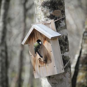 巣箱の入居者