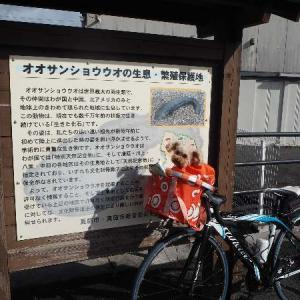 11年振りの蒜山サイクリングロード