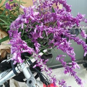 今週の花と、今週の常備菜と、ごぞごぞ