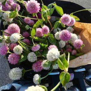 小さな嬉しいことと、今週の花パート2