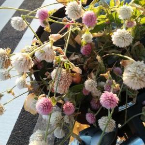 今週の花とか、ナッツグラノーラとか、、、