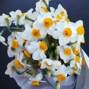 今週の花と、今年の運勢