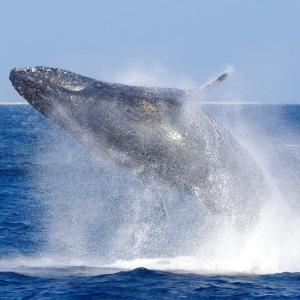 クジラ・ウオッチング