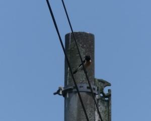千歳市内の野鳥(2020/06/13)