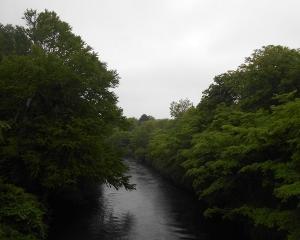おはよう橋から千歳川(定点観察)2020/07/02