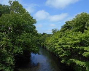 おはよう橋から千歳川(定点観察)2020/07/05