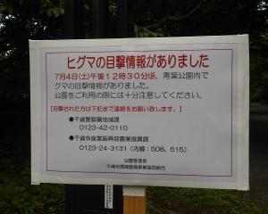 青葉公園でヒグマ情報
