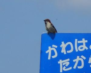 千歳市内の野鳥(2020/08/01)