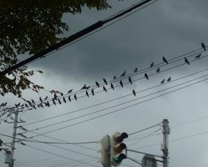 千歳市内の野鳥(2020/10/07)