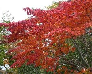 今シーズンの紅葉