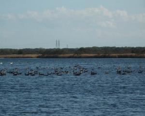 ウトナイ湖の野鳥(2020/10/17~18)