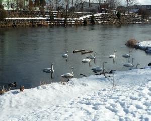 千歳市内の野鳥(2021/01/27)