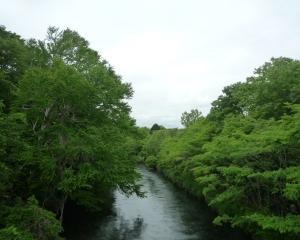 おはよう橋から千歳川(定点観察)2021/06/23