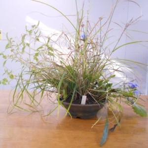 草もの盆栽を楽しむ会 10月の例会