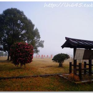 濃霧の藤原宮跡で、撮影する事が出来た朝。
