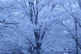 春の嵐に目を細め(高松宮記念、他、今日の買い目)