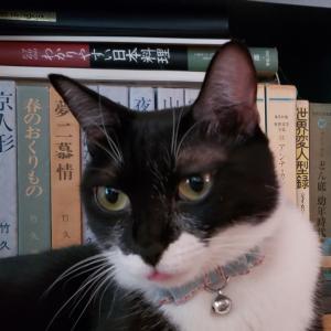 本日と明日はお休み(9月12、13日)